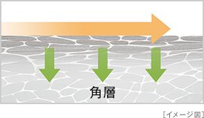 角層 イメージ図